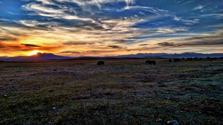 Colorado Buffalo Sunset